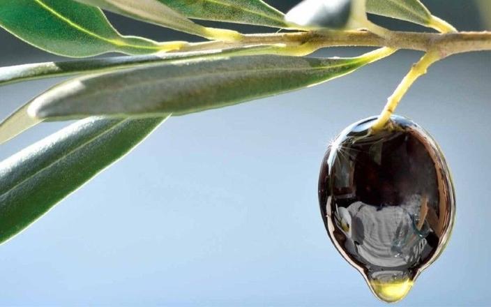 Uleiuri de Măsline